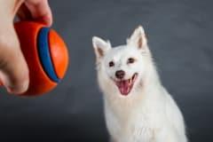Rescue Dog Bella favourite ball