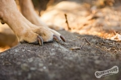 Paws, claws on rock