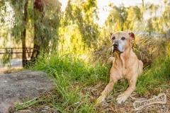 Rescue Dog Roxy