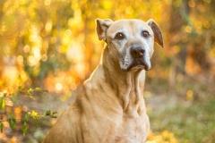 Rescue Dog Winston
