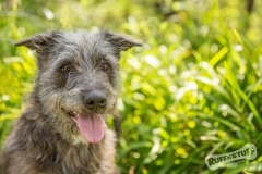 Scruffy Rescue Terrier