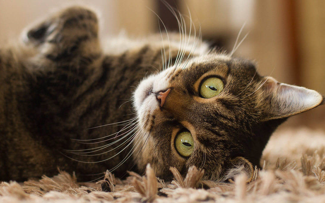 Top Pet Photo Tips You Can Use at Home