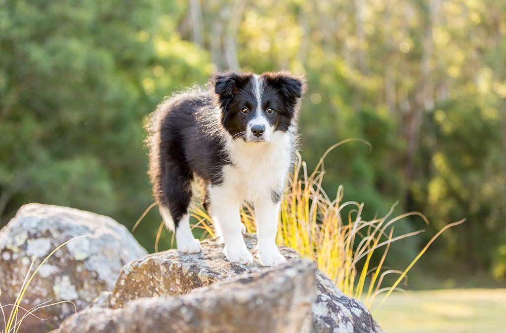 Tempus visits Kangaroo Valley