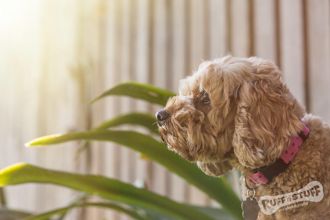 Helen Trenerry | Wollongong Dog Photographer