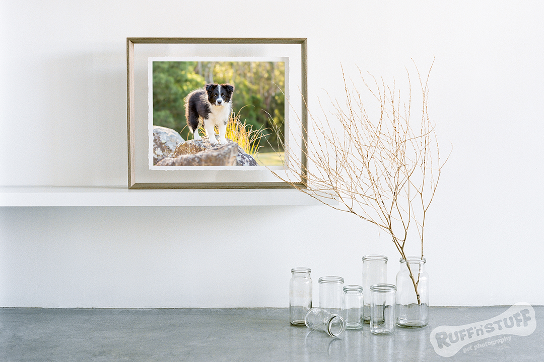 Fine Art for Walls - Ruff 'n' Stuff Pet Photography