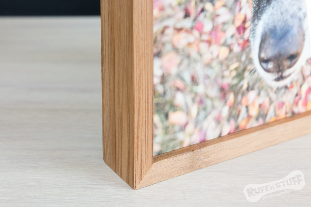 Bamboo Frames - Ruff 'n' Stuff Pet Photography
