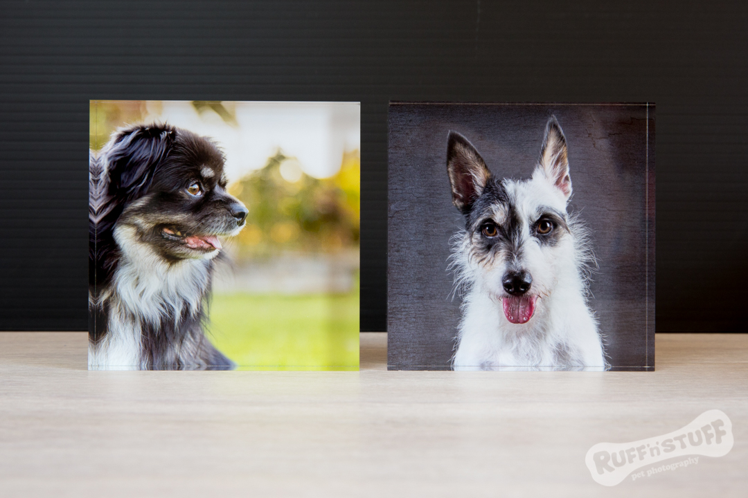 Acrylic Blocks - Ruff 'n Stuff Pet Photography
