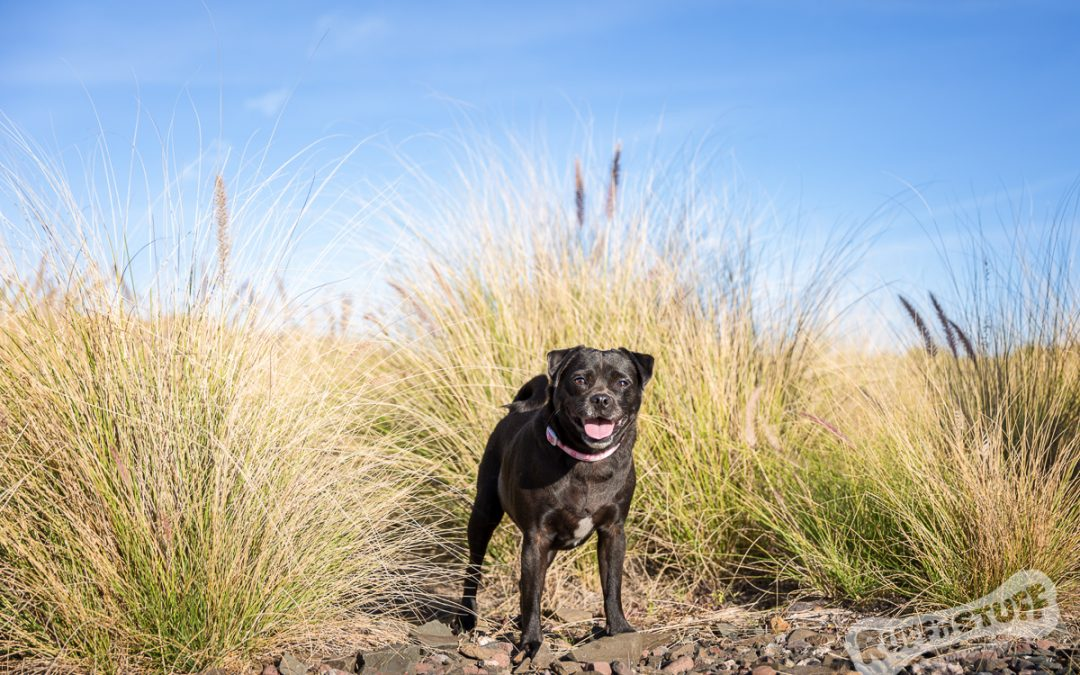 Top Ten Tips for Choosing your Pet Photographer